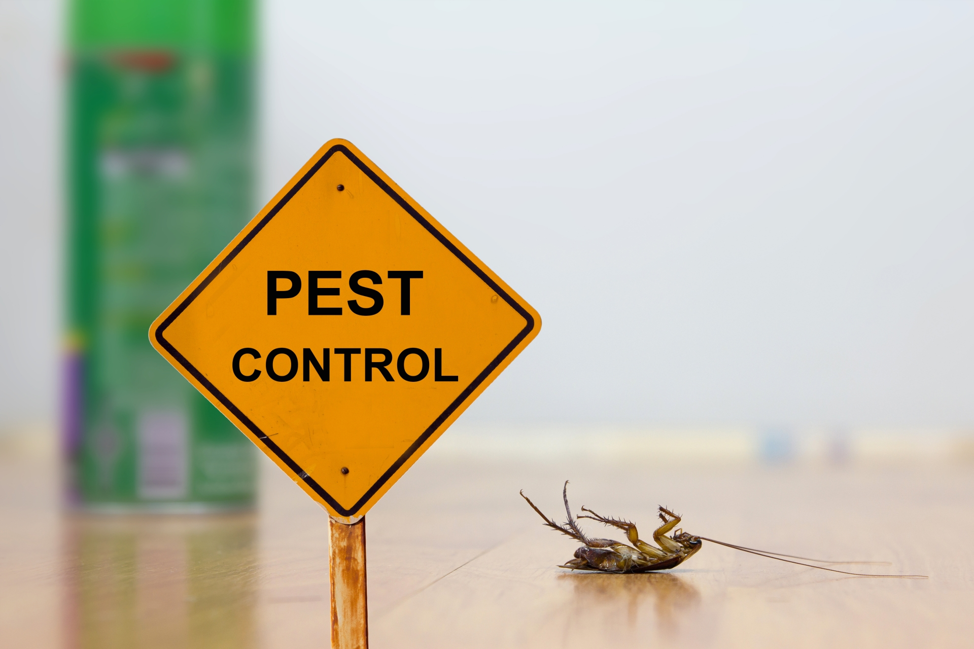24 Hour Pest Control, Pest Control in Chadwell Heath, Little Heath, RM6. Call Now 020 8166 9746